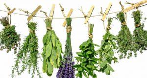 Отравы и настои из лесных трав не только очень полезные, но невероятно вкусные и ароматные.